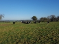View-Cattle1