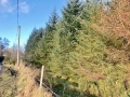 forestry-pic